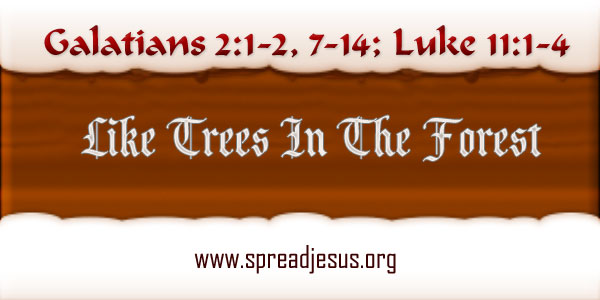 Like Trees In The Forest Homily year B Wednesday Week 27 Readings: Galatians 2:1-2, 7-14; Luke 11:1-4