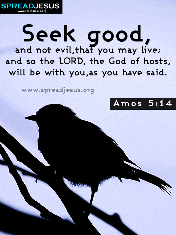 AMOS 5-14 BIBLE QUOTES IMAGES,BIBLE QUOTES HD-WALLPAPERS,FACEBOOK TIMELINE COVERS AMOS 5-14 BIBLE QUOTES