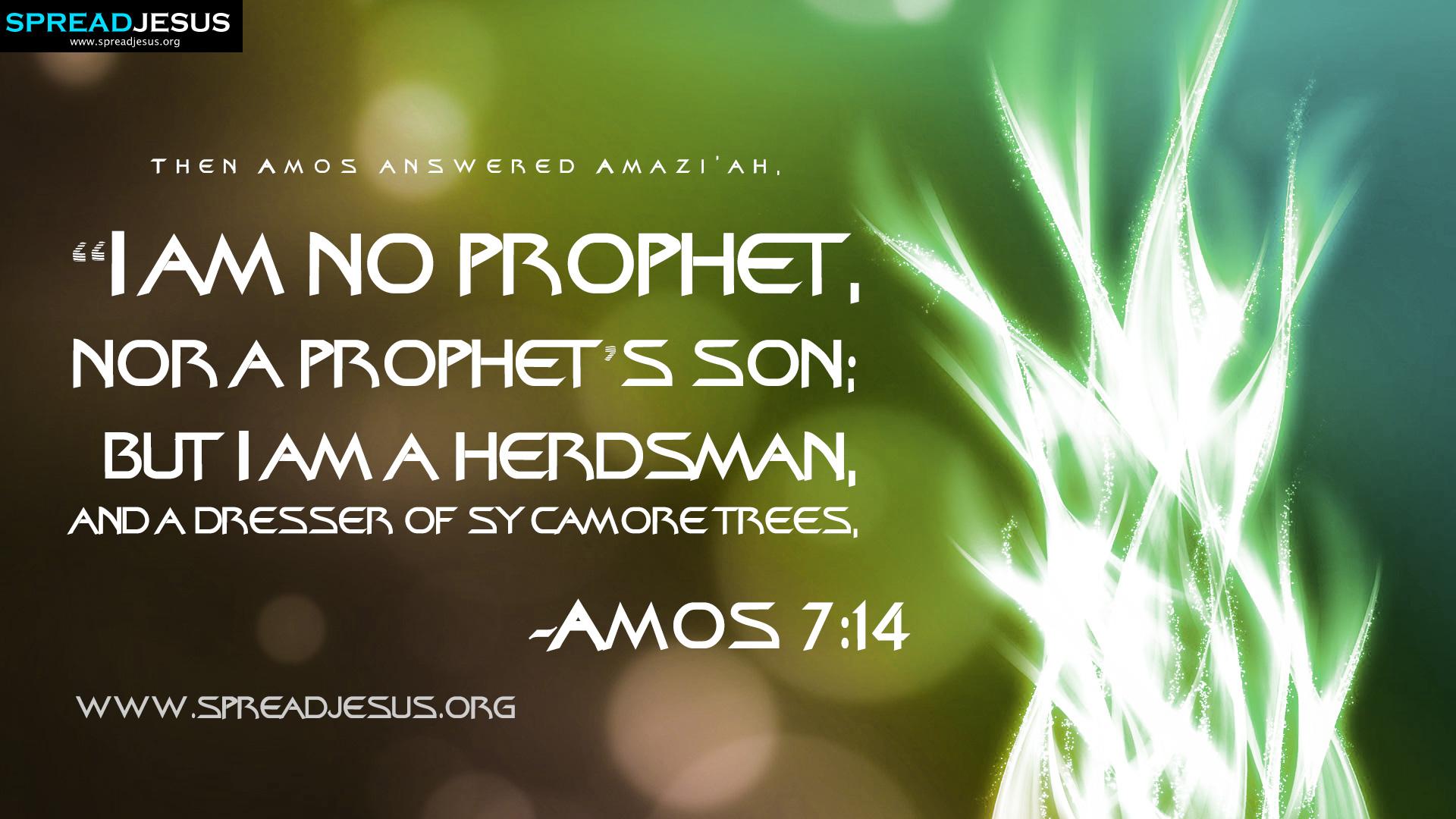 Christmas Trees Bible