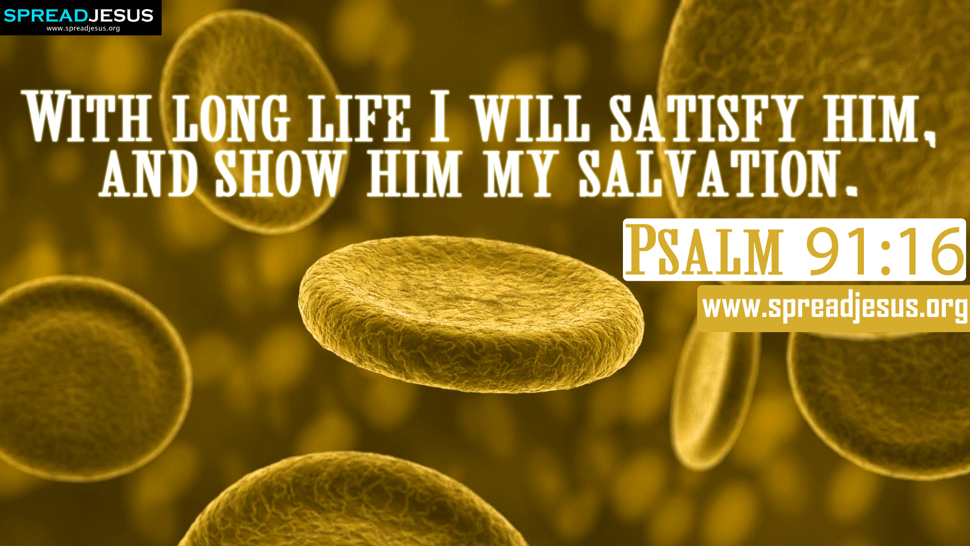 Psalm 9116 Bible Quotes Hd Wallpapers Free Download